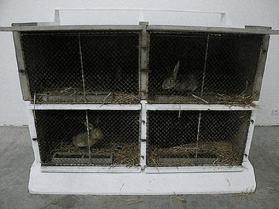 Rabbit Hutch - melbourne