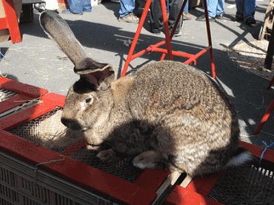 Rabbit Hutches Sydney