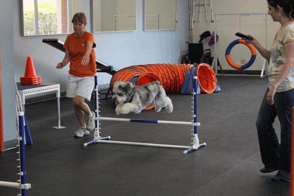 Aussiedoodle Training